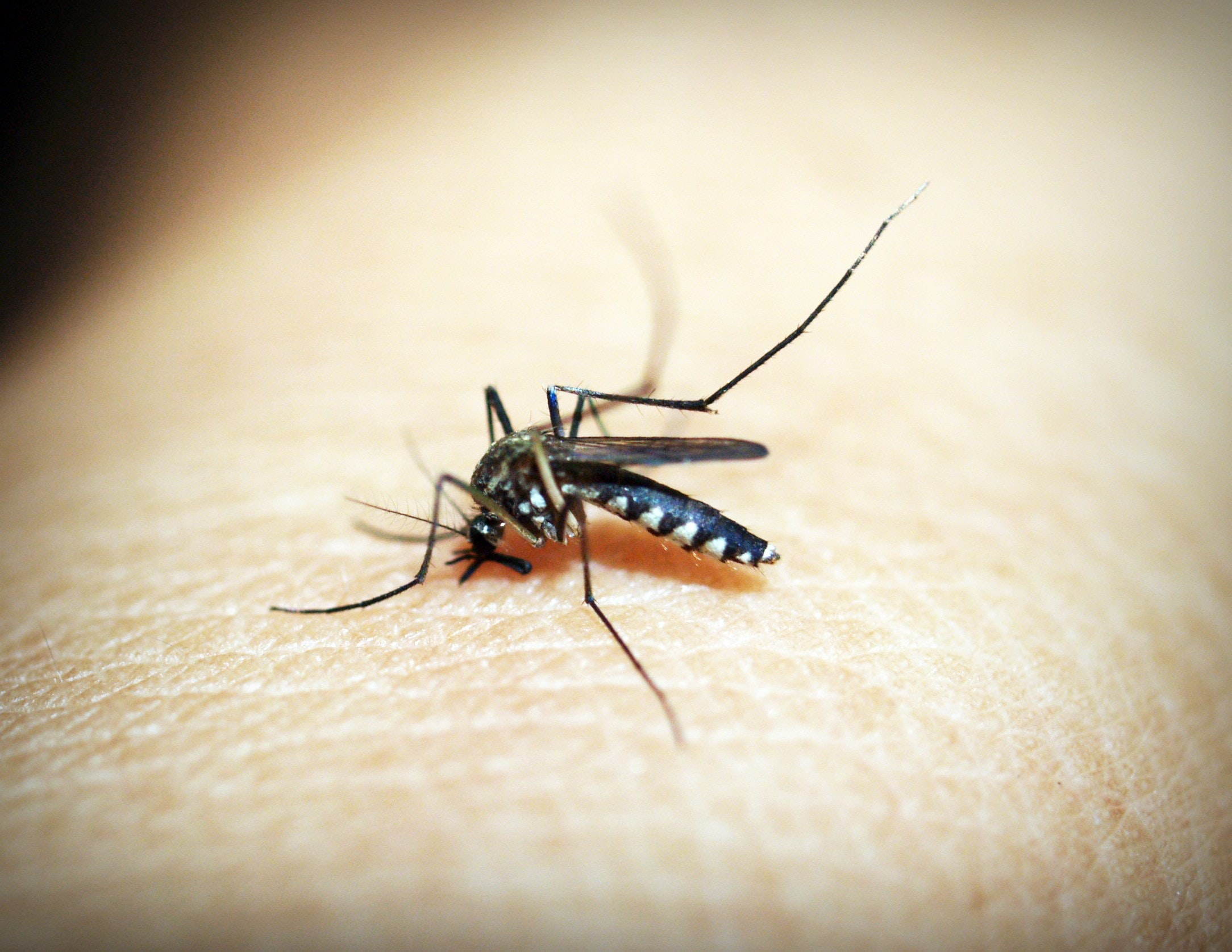 mosquito biting human Stokes Mosquito and Outdoor Pest Service Augusta GA Aiken SC